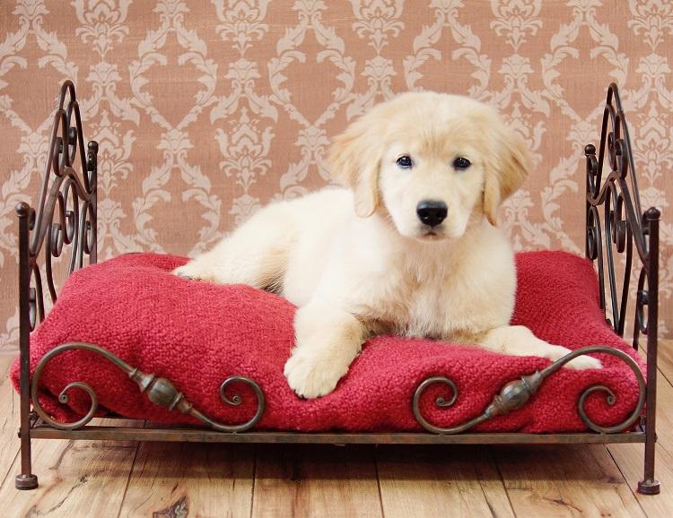 zuzu_puppy
